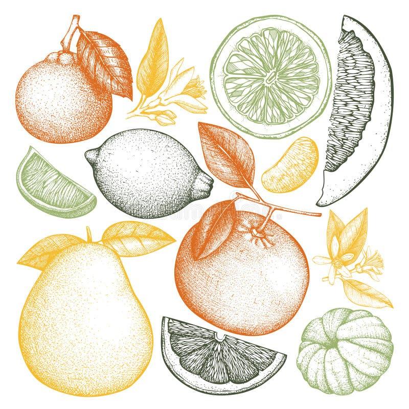Gezeichnete Sammlung der Weinlese-Tinte Hand Zitrusfrüchte Vektorzeichnungen lokalisiert auf weißem Hintergrund Skizzierte Illust lizenzfreie abbildung
