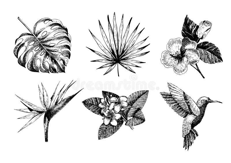 Gezeichnete tropische Betriebsikonen Vecotr Hand Exotische gravierte Blätter und Blumen Monstera, Livistonapalmblätter, Vogel von vektor abbildung