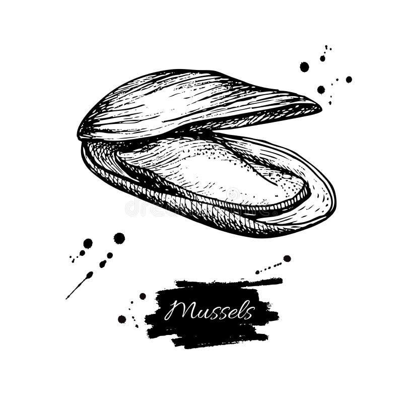 Gezeichnete Vektorillustration der Miesmuschel Hand Gravierte Artweinlesemeeresfrüchte Austernskizze lizenzfreie abbildung