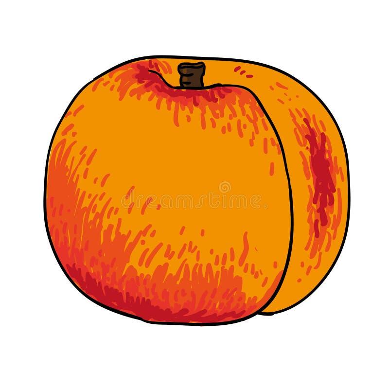 Gezeichneter Früchte lokalisierter Vektor des Pfirsiches Hand stock abbildung