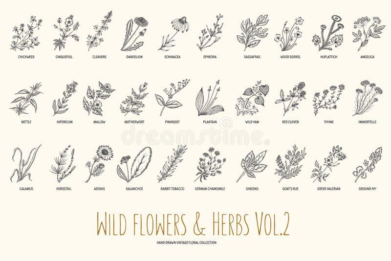 Gezeichneter Satz der wilden Blumen und der Kräuter Hand Volumen 2 botanik Universalschablone für Grußkarte, Webseite, Hintergrun vektor abbildung