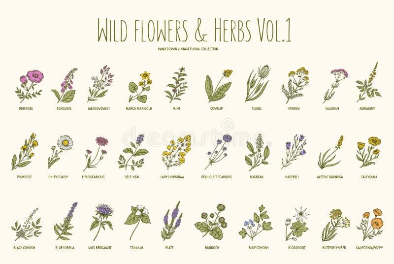 Gezeichneter Satz der wilden Blumen und der Kräuter Hand Volumen 1 Weinlesevektorillustration lizenzfreie abbildung