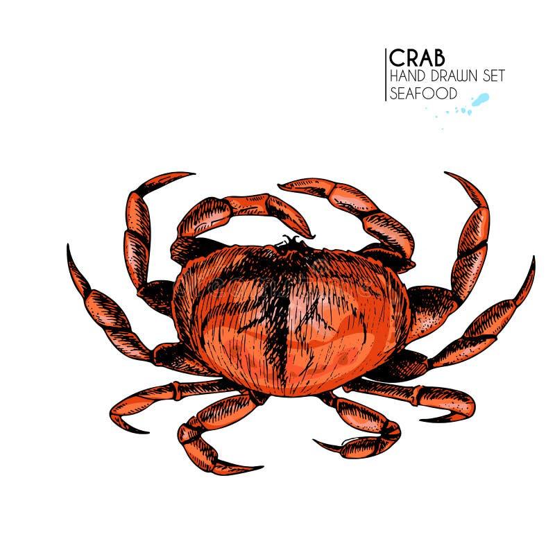 Gezeichneter Satz des Vektors Hand Meeresfrüchteikonen Getrennte Befestigungsklammer Gravierte farbige Kunst Köstliche Marinelebe vektor abbildung
