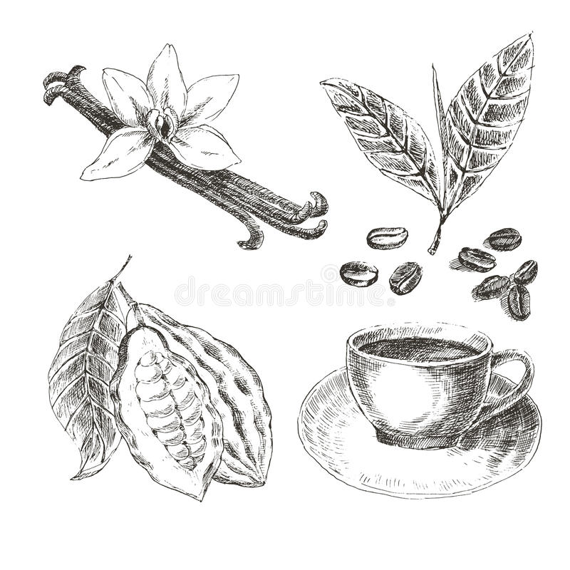 Gezeichneter Satz des Vektors Hand mit Nachtisch-Gewürzen Nette Vögel eingestellt Retro- Sammlung Vanille, Kakao, Kaffeebohnen stock abbildung
