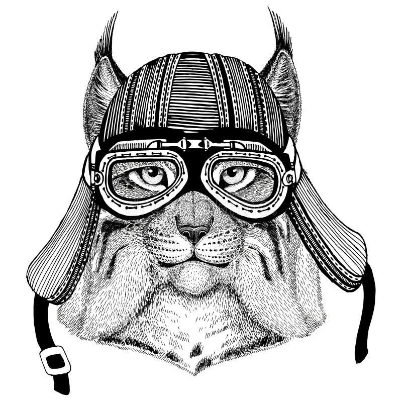 Gezeichnetes Bild des Wildkatze-Luchses Bobcat TrotHand des tragenden Motorradtiersturzhelms für T-Shirt, Tätowierung, Emblem, Au vektor abbildung