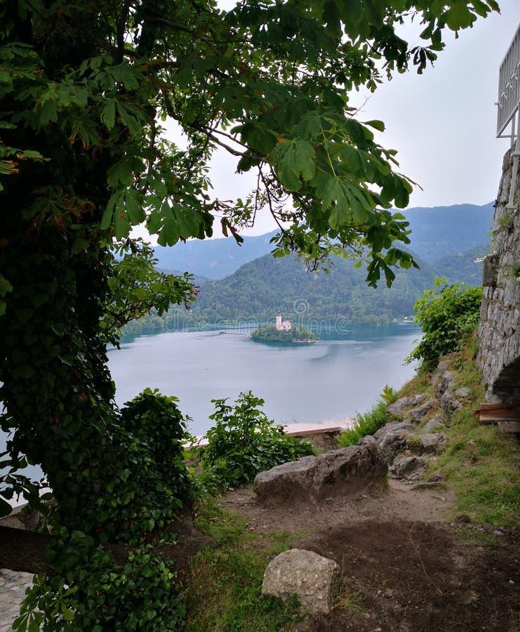Gezicht bij Afgetapt meer, Slovenija royalty-vrije stock fotografie