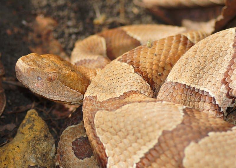 Gezicht van een Copperhead-Slang stock foto
