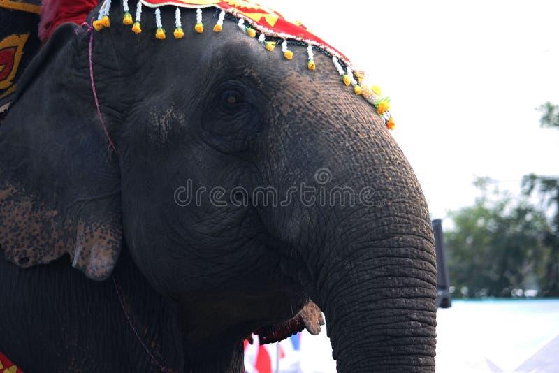 Gezicht van jonge Aziatische olifant Sluit omhoog van geschilderd kleurrijk elep royalty-vrije stock fotografie
