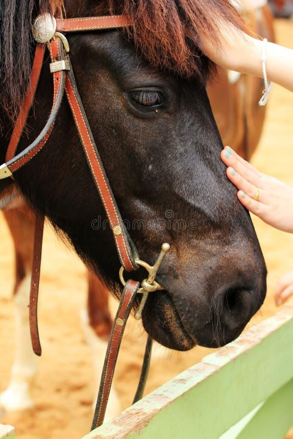 Gezicht van paard royalty-vrije stock afbeeldingen
