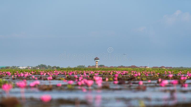 Gezichtspunttoren met lotusbloembloemen in Thalenoi, Phatthalung-Provincie stock foto's
