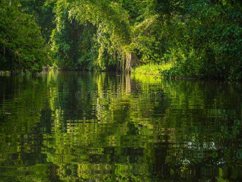 Gezien op tropische rivier, bezinningen royalty-vrije stock foto
