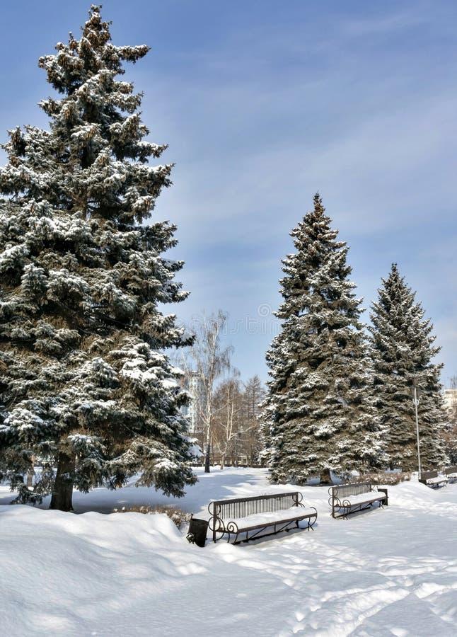 Gezierte Gasse mit den Bänke bedeckt mit frischem flaumigem Schnee im Stadt Park auf einem sonnigen eisigen Morgen stockbilder