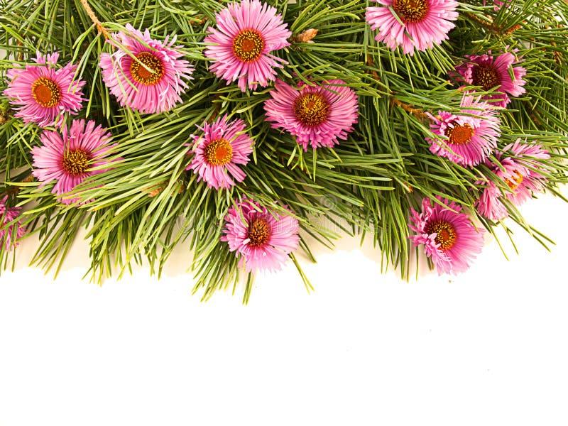 Gezierte Zweige und purpurrote Blumen lizenzfreie stockbilder
