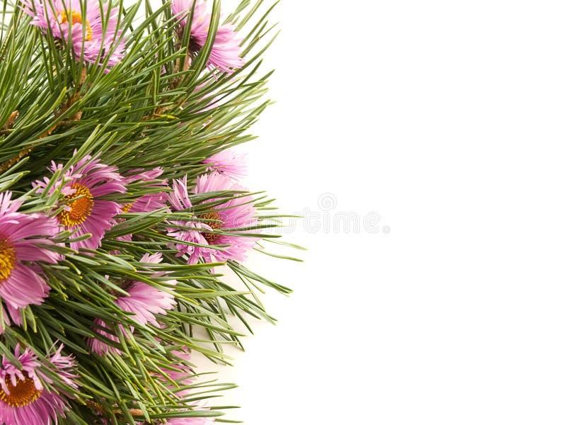 Gezierte Zweige und purpurrote Blumen auf einem Weiß stockfoto