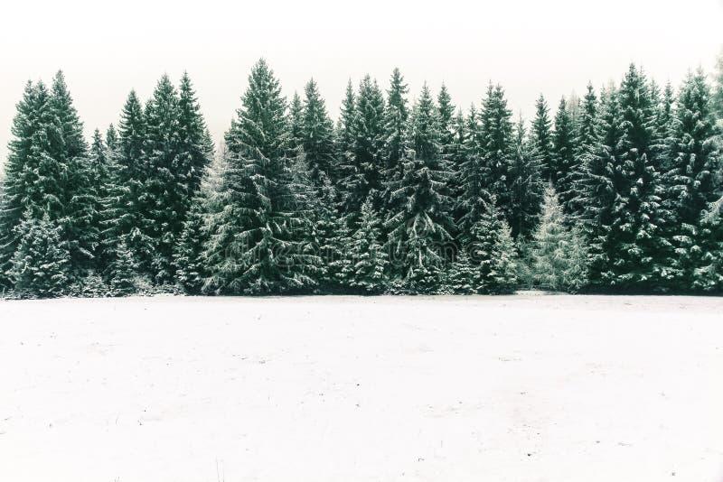 Gezierter Baumwald bedeckt durch frischen Schnee während der Winter-Weihnachtszeit stockbilder
