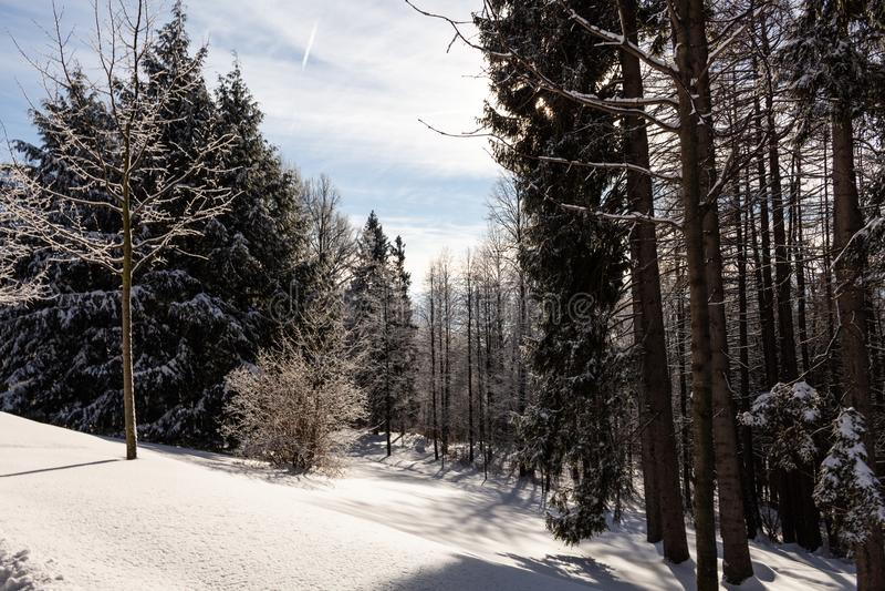 Gezierter Baumwald bedeckt durch frischen Schnee während der Winter-Weihnachtszeit Diese Winterszene ist fast das duotone wegen d stockbilder
