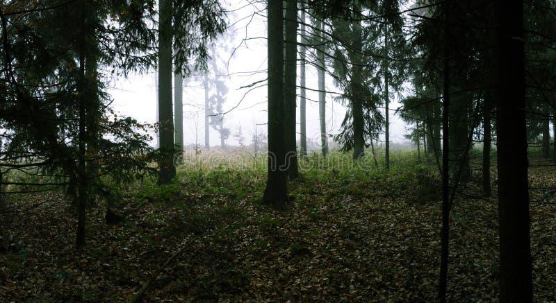 Gezierter Wald stockfoto
