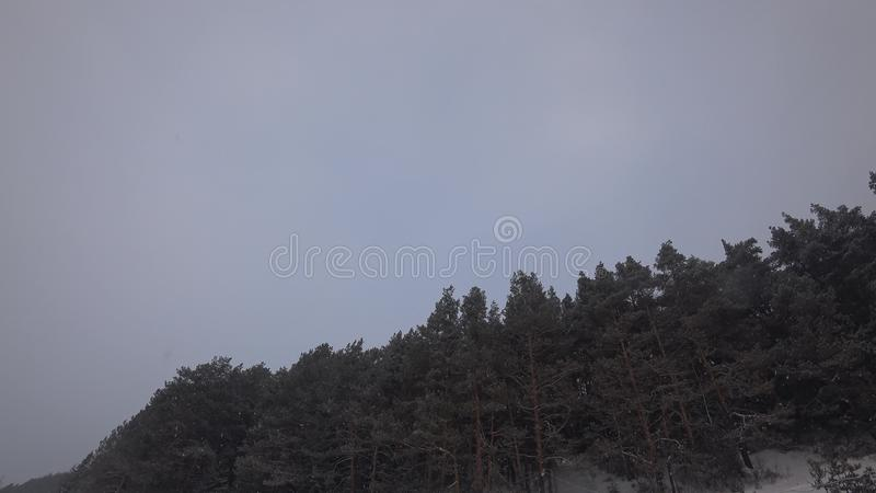 Gezierter Wald unter Schneeflocken stock video footage