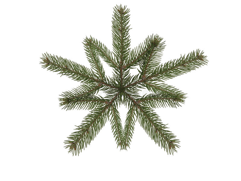 Gezierter Zweig der Schneeflocke lizenzfreie stockfotos