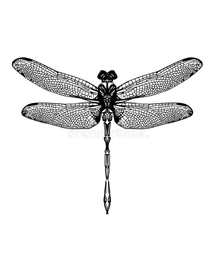 Gezogene grafische Schwarzweiss-Libelle vektor abbildung