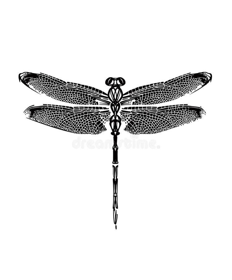 Gezogene grafische Schwarzweiss-Libelle lizenzfreie abbildung