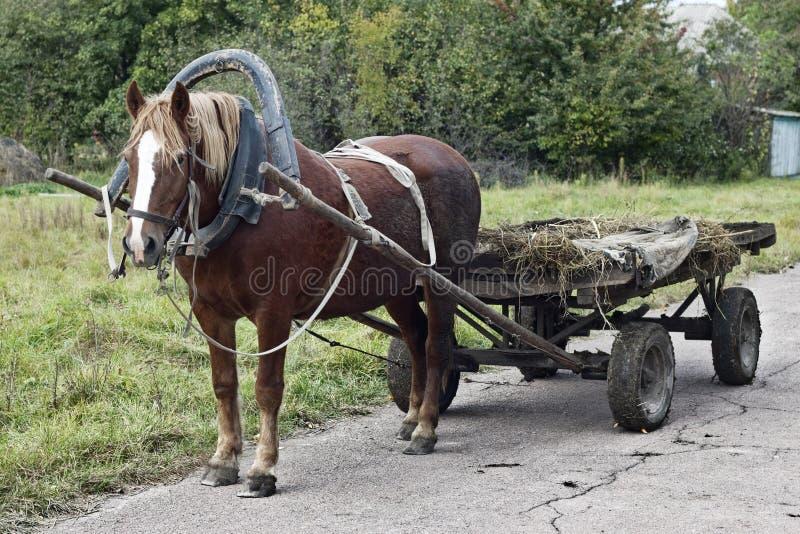 Gezogenes Pferd lizenzfreies stockbild