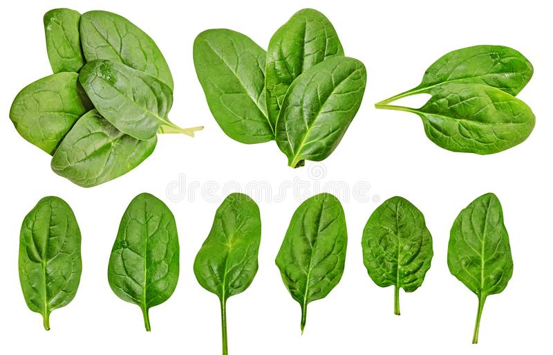 Gezond dieet spinazie groen Voor het koken van voedsel Dieet Voor uw ontwerp Geïsoleerde stock afbeeldingen