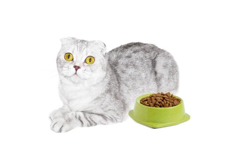 Gezond voedsel voor katten royalty-vrije stock foto's