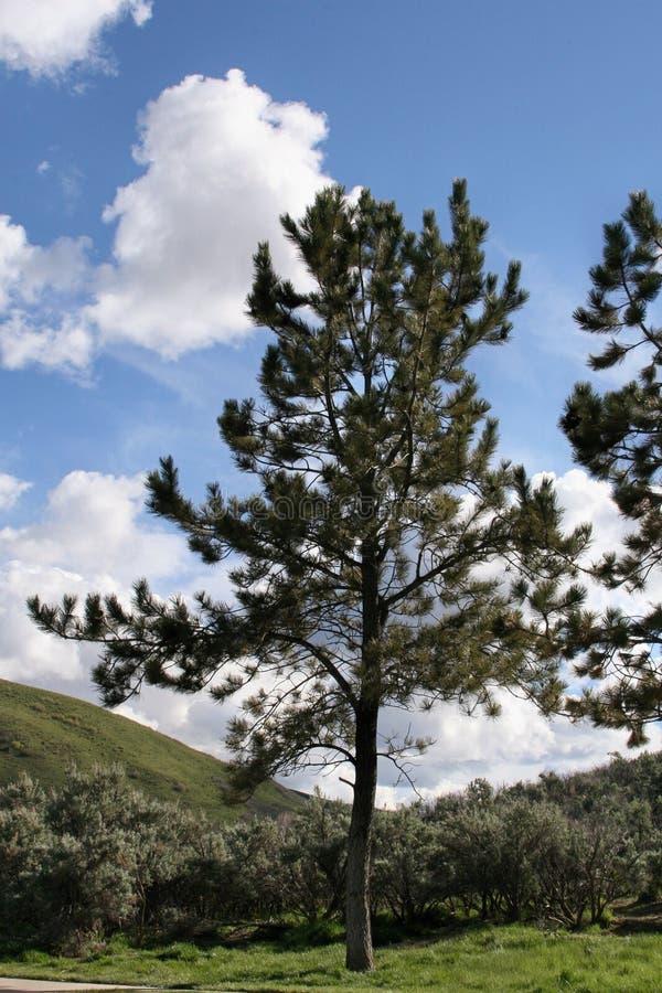 Gezonde boom op een gebied met struiken en groene gras en bergen royalty-vrije stock afbeelding