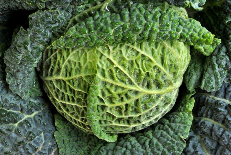 gezonde en verse organische savooiekool stock fotografie