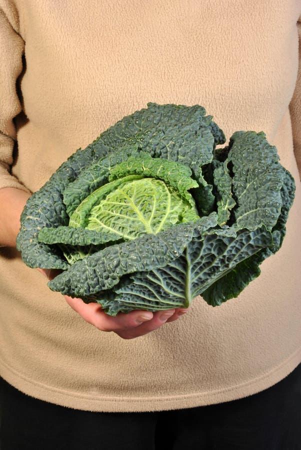 gezonde en verse organische savooiekool stock afbeelding