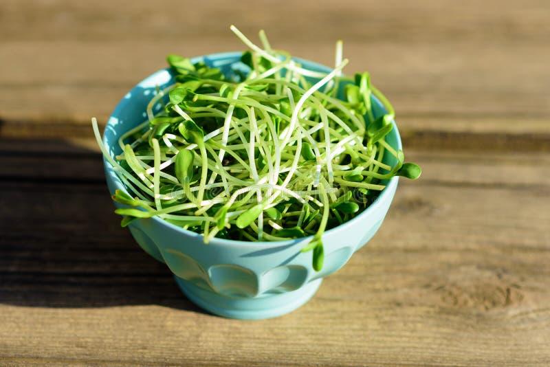 Gezonde Groene Organische Ruwe Zonnebloemspruiten klaar voor het eten of smoothie Jonge ruwe verse groene twijgen bij zonnige dag stock afbeelding