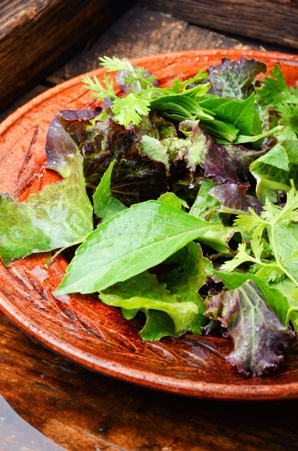 Gezonde groene salade royalty-vrije stock fotografie