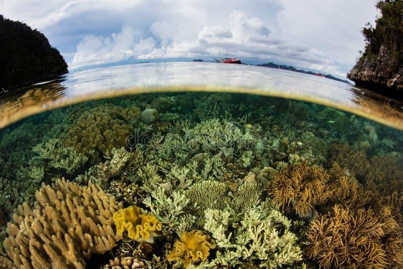 Gezonde Koralen en Kalm Water in Raja Ampat royalty-vrije stock afbeelding
