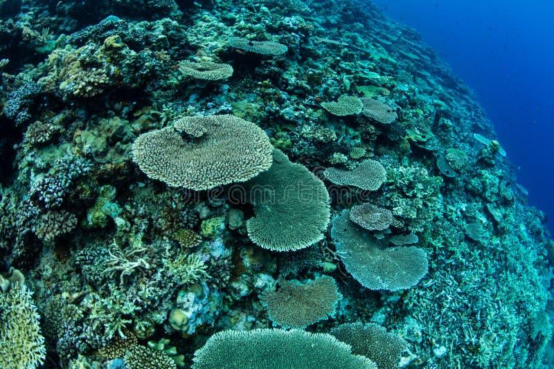 Gezonde Koralen in Papoea-Nieuw-Guinea royalty-vrije stock afbeelding