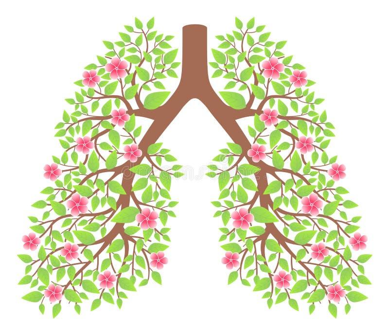 Gezonde longen stock foto