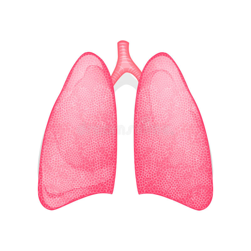 Gezonde menselijke longen stock illustratie
