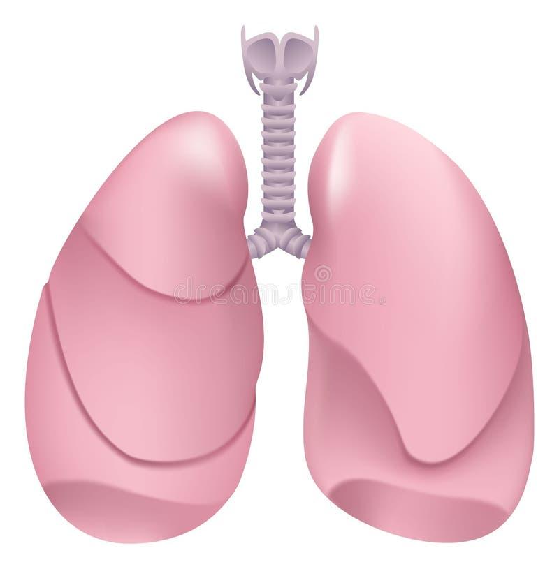 Gezonde menselijke longen Ademhalingssysteem Long, strottehoofd en trachee van gezonde persoon stock illustratie