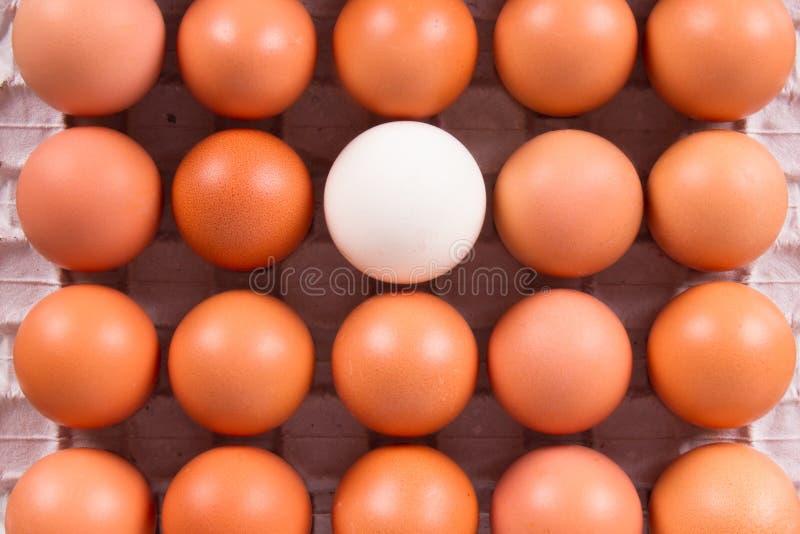 Gezonde Organische Eieren royalty-vrije stock foto