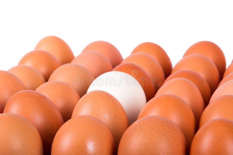 Gezonde Organische Eieren stock afbeelding