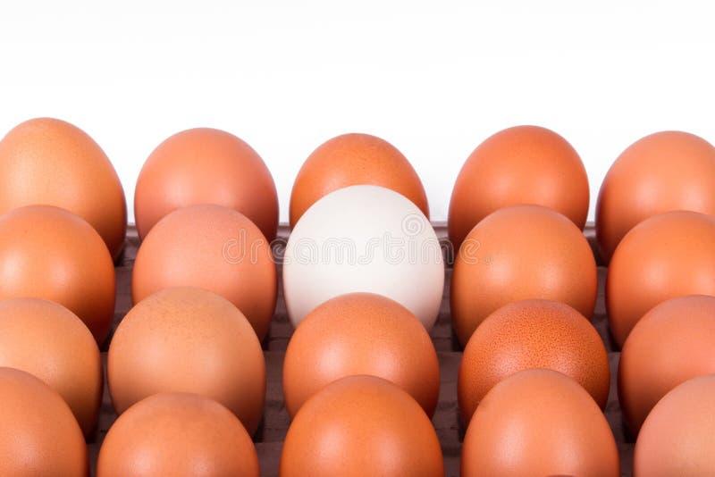 Gezonde Organische Eieren royalty-vrije stock afbeelding