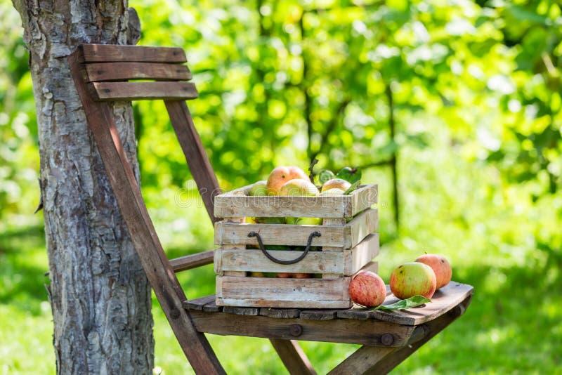 Gezonde rode appelen in houten doos royalty-vrije stock foto
