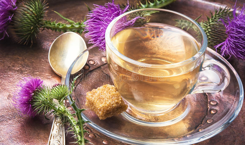Gezonde thee met distel stock foto