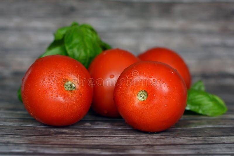 Gezonde verse en rijpe glanzende rode tomaten met basilicumbladeren op houten achtergrond royalty-vrije stock foto