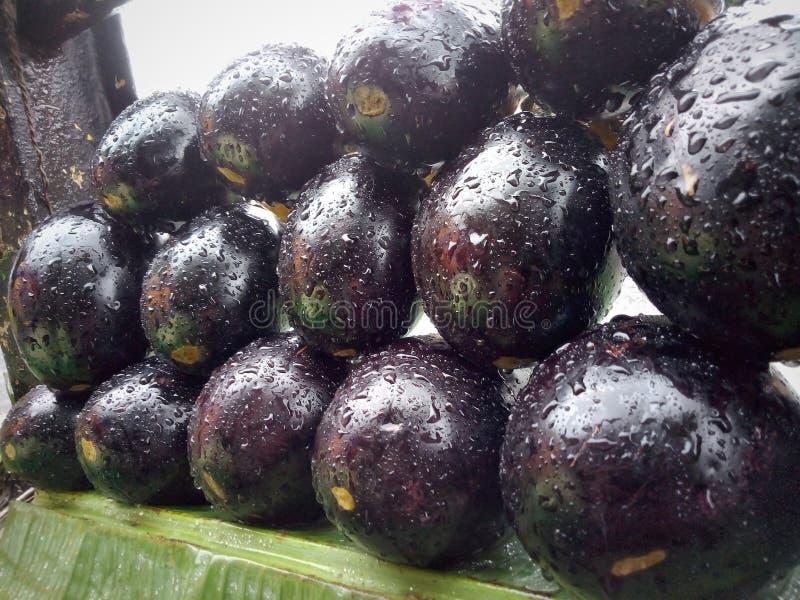 Gezonde Voedsel van de aubergine het Plantaardige Voeding royalty-vrije stock fotografie