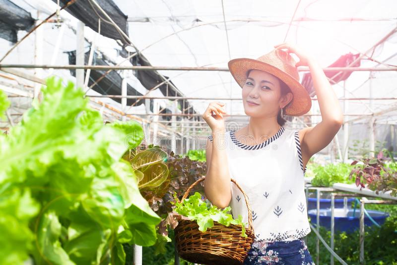 Gezonde vrouw met saladegroenten in mand in hydrocultuurlandbouwbedrijf Schoonheid en gezondheid royalty-vrije stock fotografie