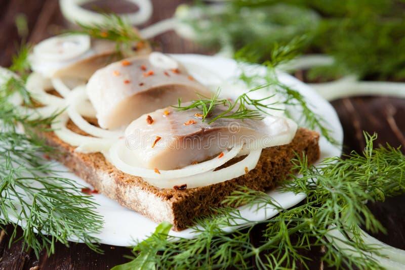 Gezouten haringenfilets met brood op een witte plaat en een dille royalty-vrije stock foto