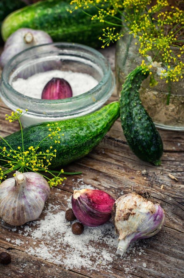 Gezouten komkommer royalty-vrije stock afbeelding