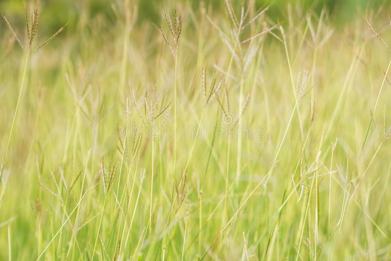GEZWELD VINGERgras stock afbeelding