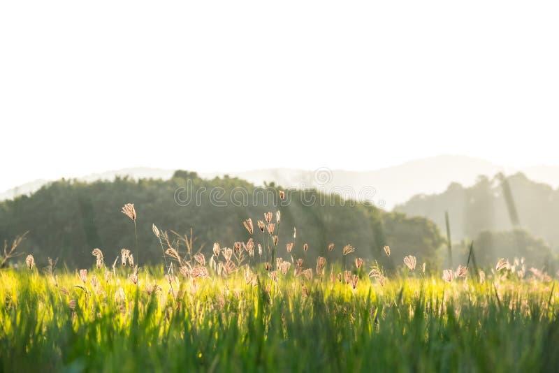 GEZWELD VINGERgras royalty-vrije stock foto's
